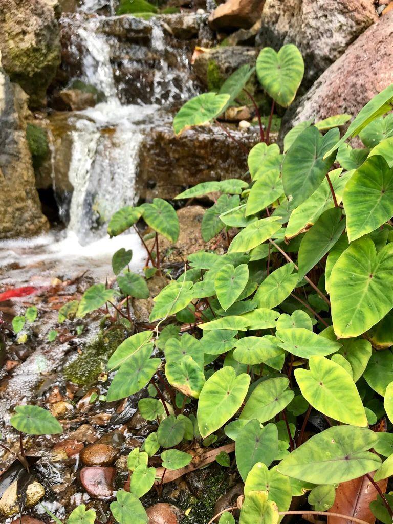 Mosses Small Flowerless Plant