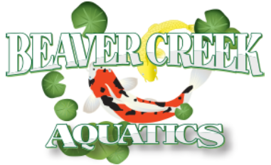 Beaver Creek Aquatics - Beaver Creek Aqua
